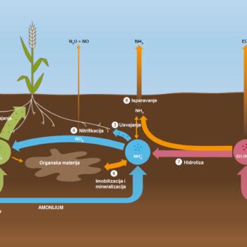 transformacija azota u zemljištu